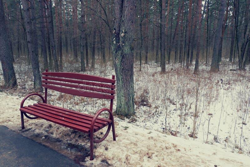 一条空的偏僻的长凳在森林 免版税库存图片