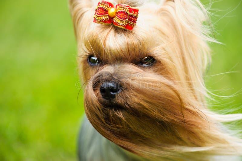 一条美丽的狗的画象 库存照片