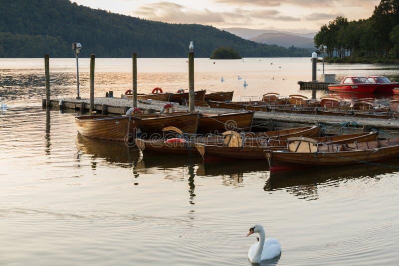 一条美丽的疣鼻天鹅和被停泊的小船的浪漫黄昏场面在湖温德米尔 免版税库存图片