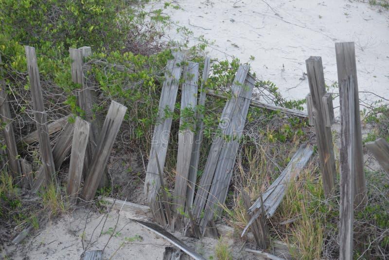 一条老木沙丘禁界线的残余含沙地板 库存照片