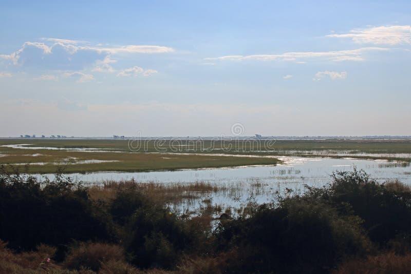 一条被充斥的CHOBE河的浩大的浩瀚 库存照片