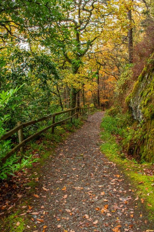 一条被操刀的路通过秋天森林地 库存照片