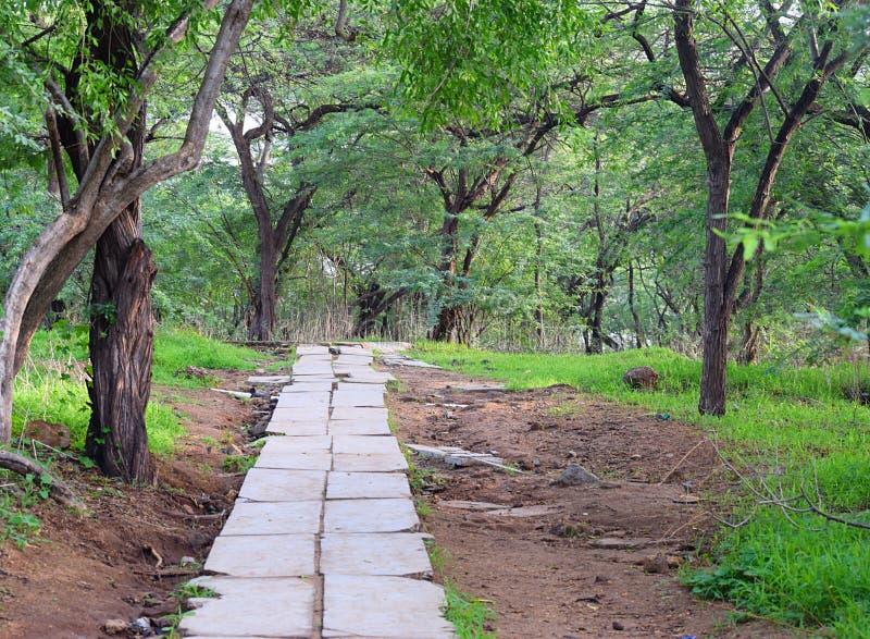 一条被铺的道路穿过豆科灌木森林 图库摄影