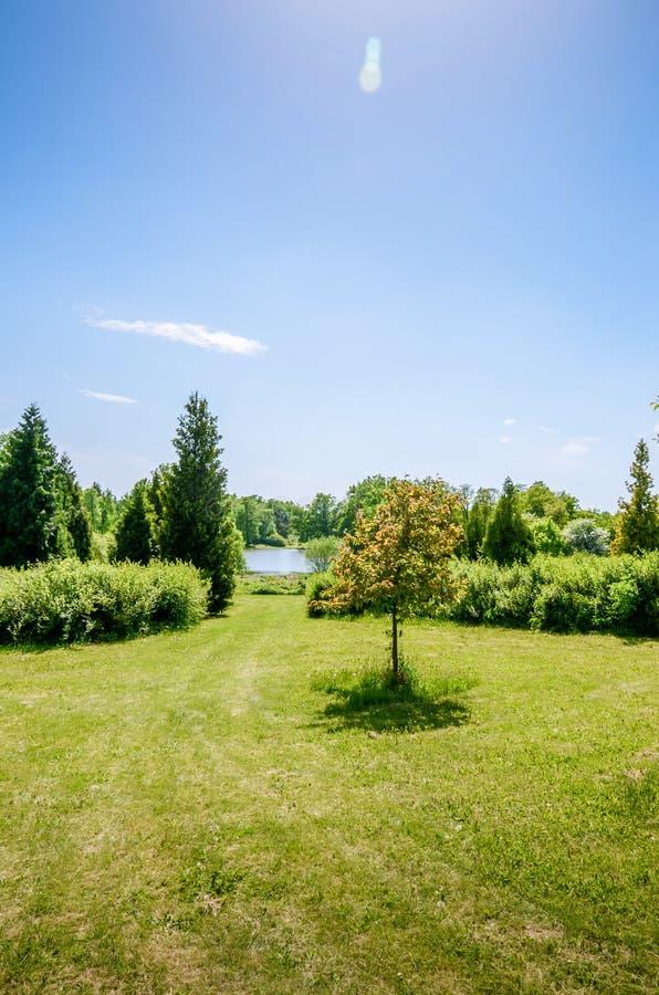 一条象草的道路向在一棵小树附近的湖 库存图片