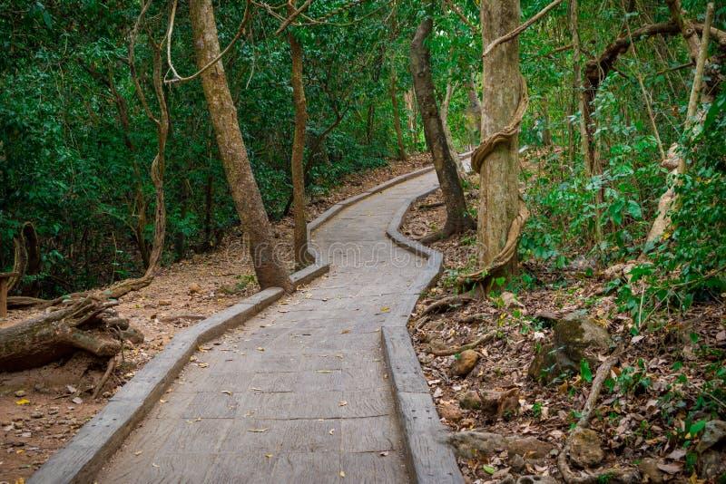 一条路的看法对森林的 免版税图库摄影