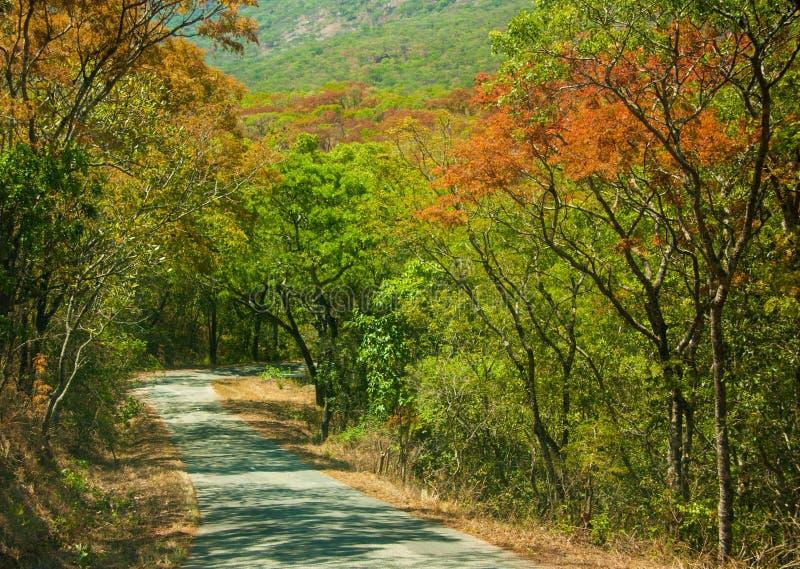 一条路通过森林在津巴布韦 图库摄影