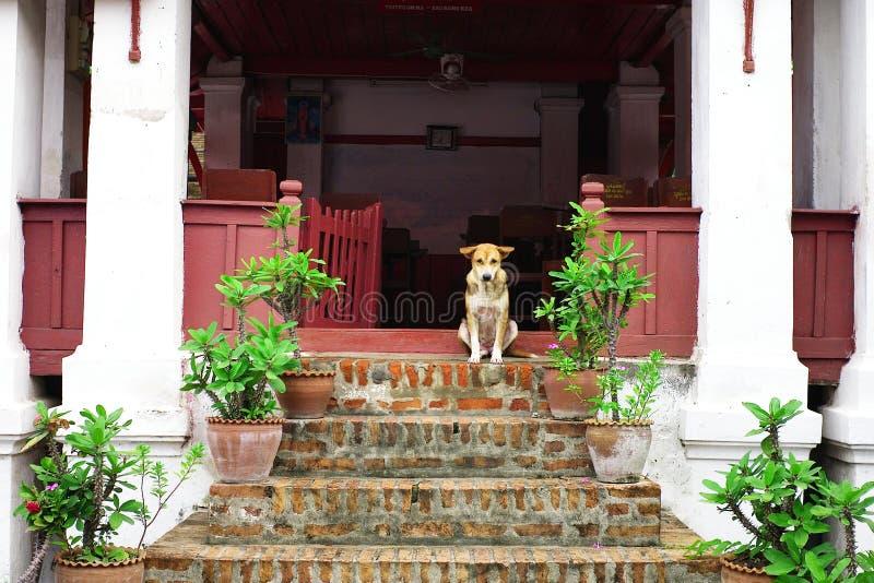 一条逗人喜爱的镇静爱犬等待在修道院学校教室大厦外面 免版税库存照片