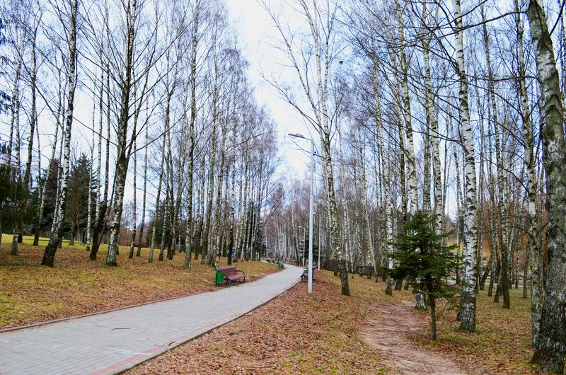 一条道路在桦树中的秋天公园 库存图片
