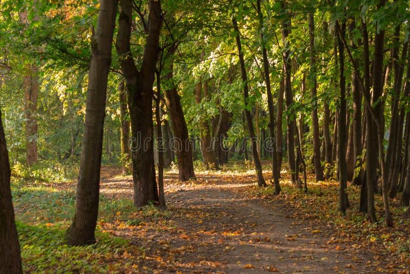 一条道路在秋天森林里 免版税图库摄影