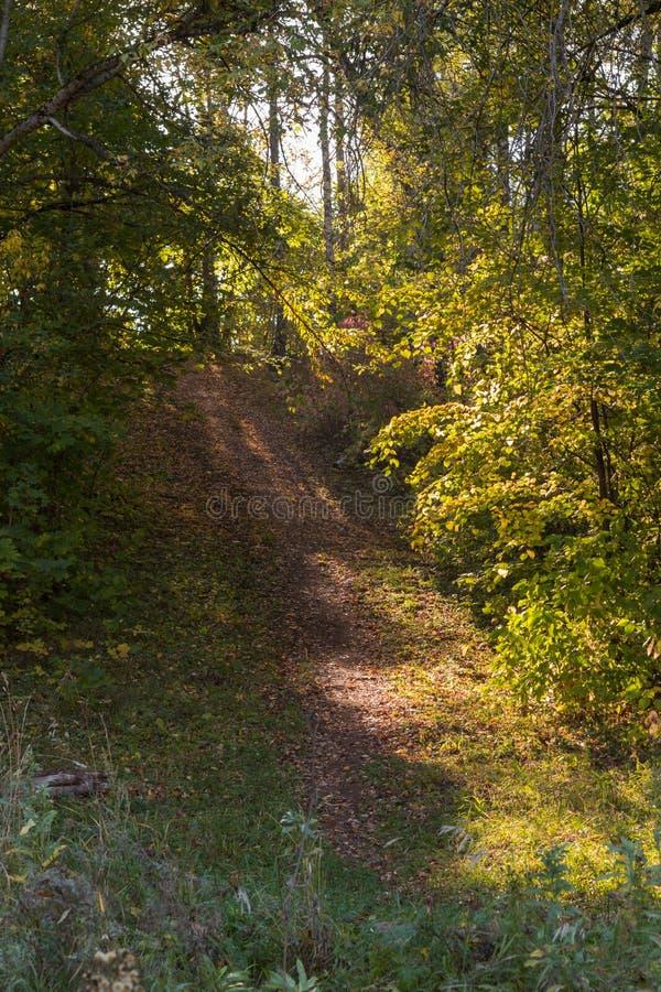 一条道路在秋天森林里 免版税库存照片