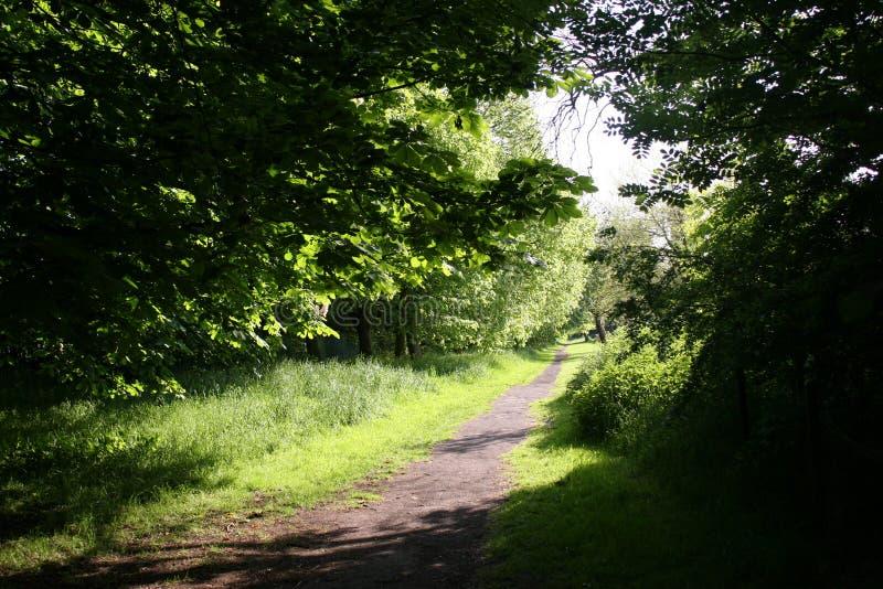一条道路穿过公园 图库摄影