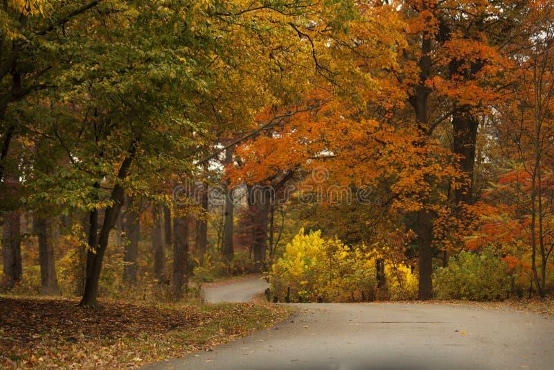 一条道路穿过在莫顿树木园的秋天颜色在Lisle,伊利诺伊 图库摄影