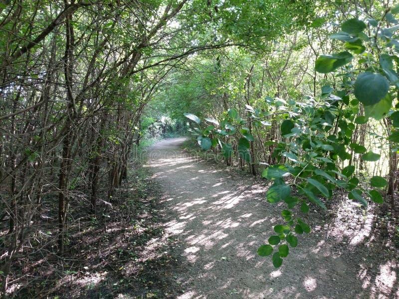 一条道路穿过树木繁茂的自然在Sertoma公园,苏族瀑布 免版税库存图片