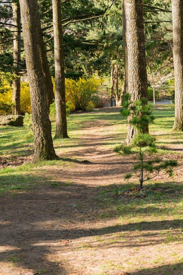 一条道路穿过清早有些树,在springtim 免版税库存图片