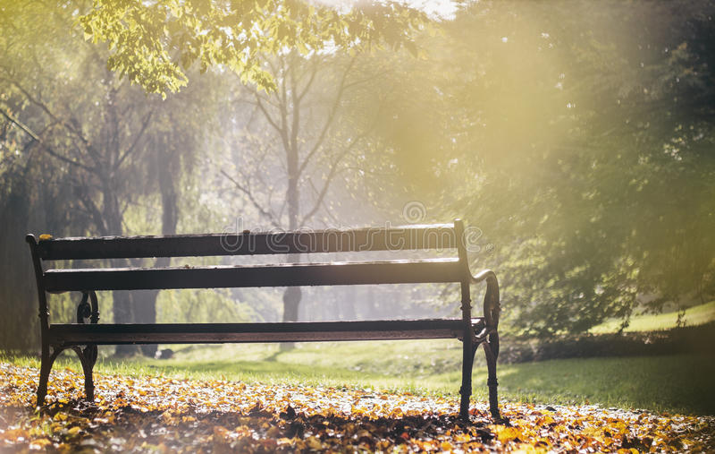 一条长凳在城市公园,金黄小时 免版税库存照片