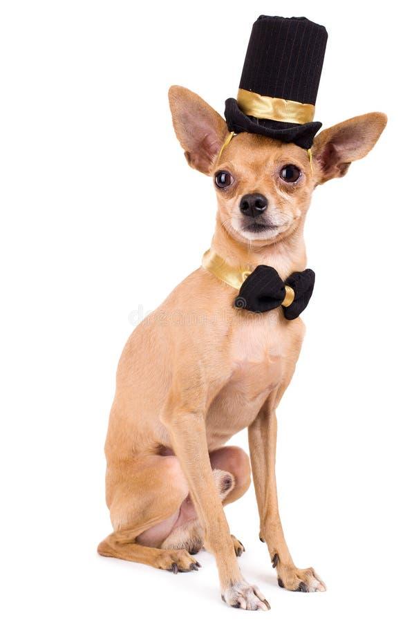 一条滑稽的玩具狗的照片在白色背景的 免版税库存照片