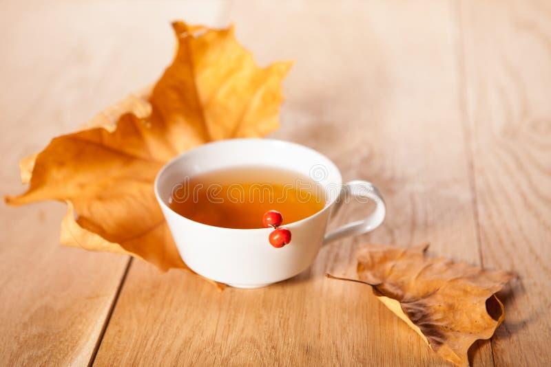 一杯茶与槭树落的秋叶的,和花揪莓果在木桌的背景的 图库摄影
