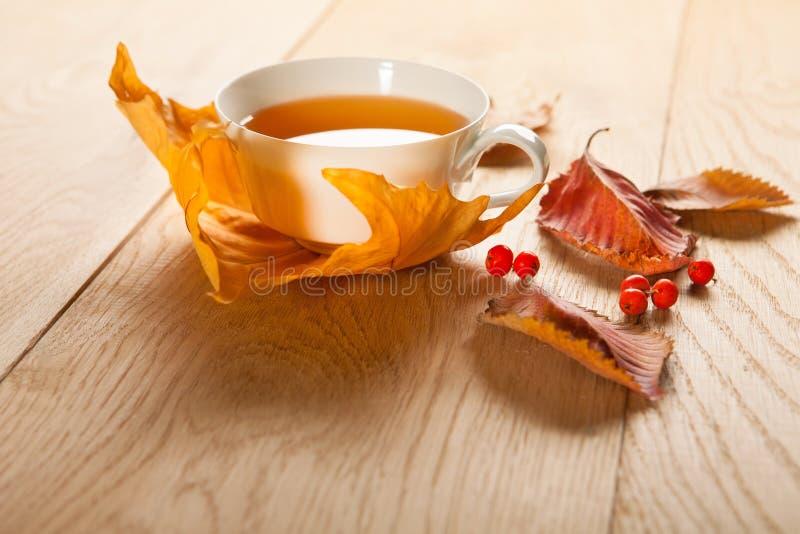 一杯茶与槭树落的秋叶的,和花揪莓果在木桌的背景的 库存图片