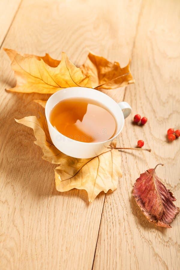 一杯茶与槭树落的秋叶的,和花揪莓果在木桌的背景的 库存照片