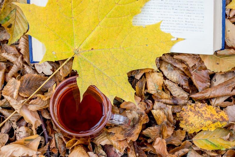 一杯茶和在书和秋天干燥叶子附近的一黄色枫叶在woods_ 免版税库存照片