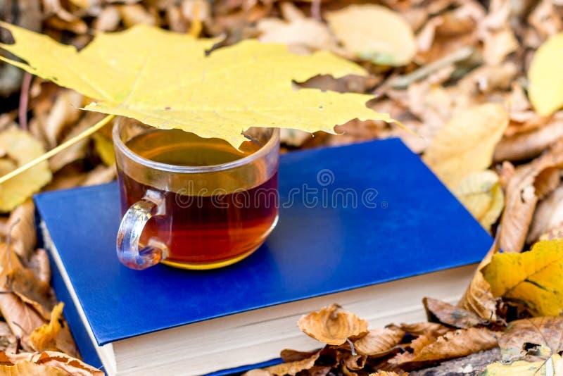 一杯茶,盖用一黄色枫叶,在一本书在一干燥leafs_中的一个森林里 免版税库存图片