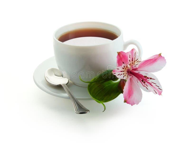 Download 一杯茶 库存图片. 图片 包括有 饮料, 生气勃勃, 杯子, 仍然, 打赌的人, 茶点, 鲜美, 绿色, 空白 - 30334797