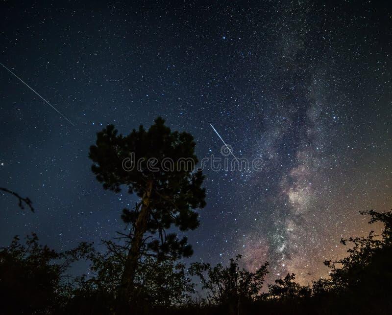 一松树的剪影在满天星斗的天空、银河和落的陨石的背景的 库存照片