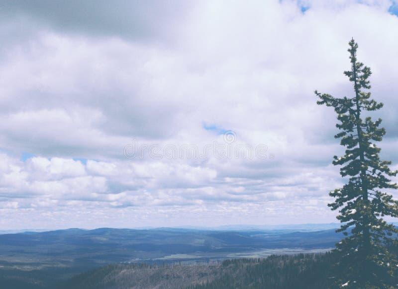 一松树的美丽的射击有小山和令人惊讶的多云天空的 免版税库存照片