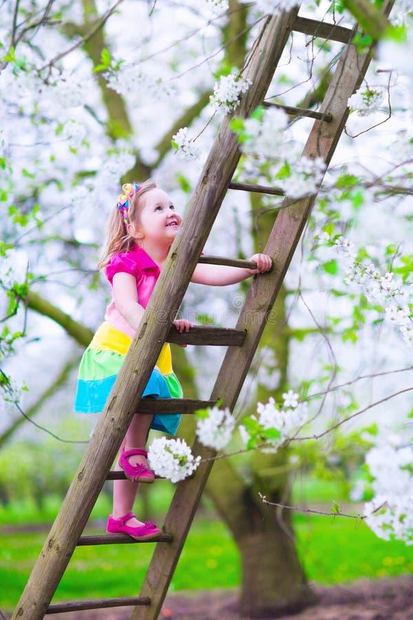 一架梯子的小女孩在苹果树庭院里 图库摄影