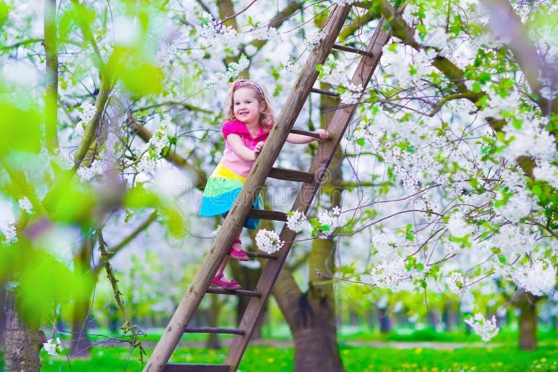 一架梯子的小女孩在苹果树庭院里 库存照片