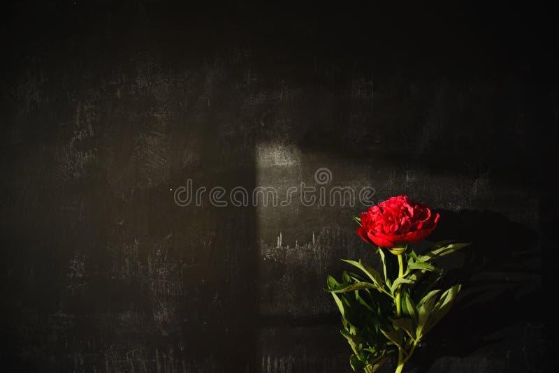 一株红色牡丹的阴影由自然光的 免版税图库摄影