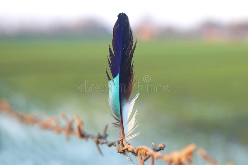 一根五颜六色和美丽的羽毛 库存照片