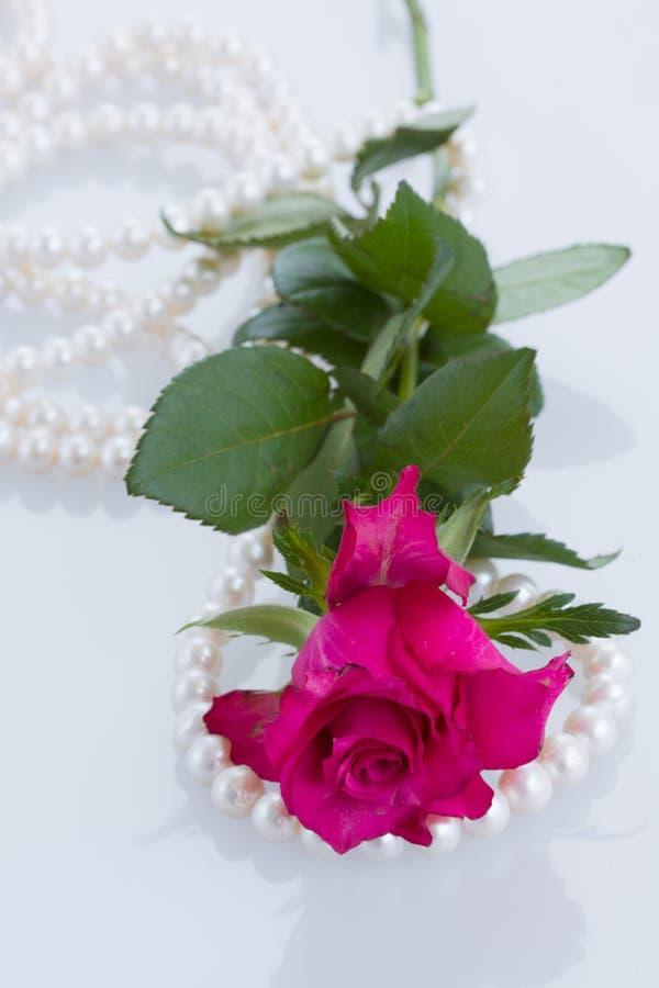 一桃红色上升了与珍珠 免版税库存图片