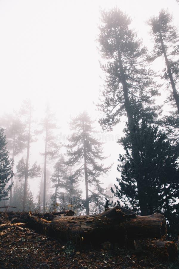 一棵下落的树的冬天背景在有雾的山的 免版税库存照片
