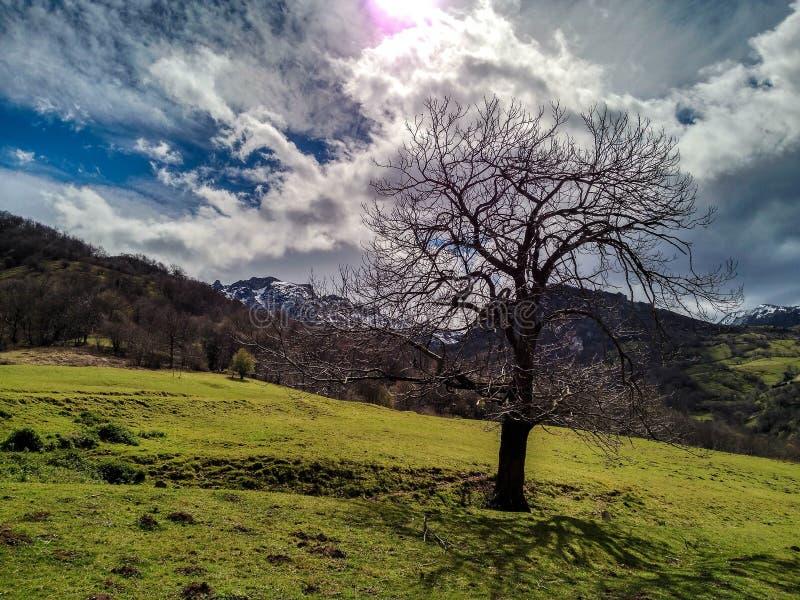 一棵偏僻的树在森林里 免版税库存照片