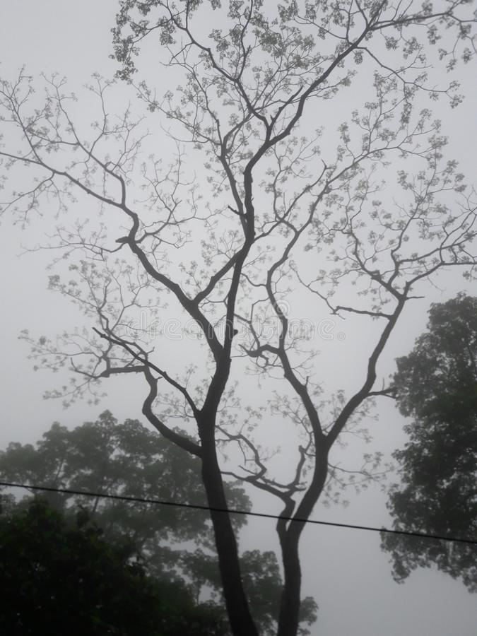 一棵偏僻的树 免版税库存照片