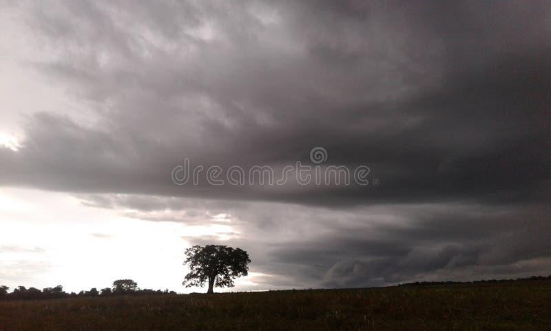 一棵偏僻的树和风暴 免版税库存图片