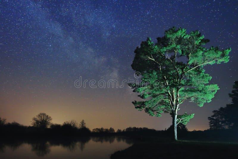 一棵偏僻的树的夜风景以满天星斗的天空为背景的 免版税库存图片