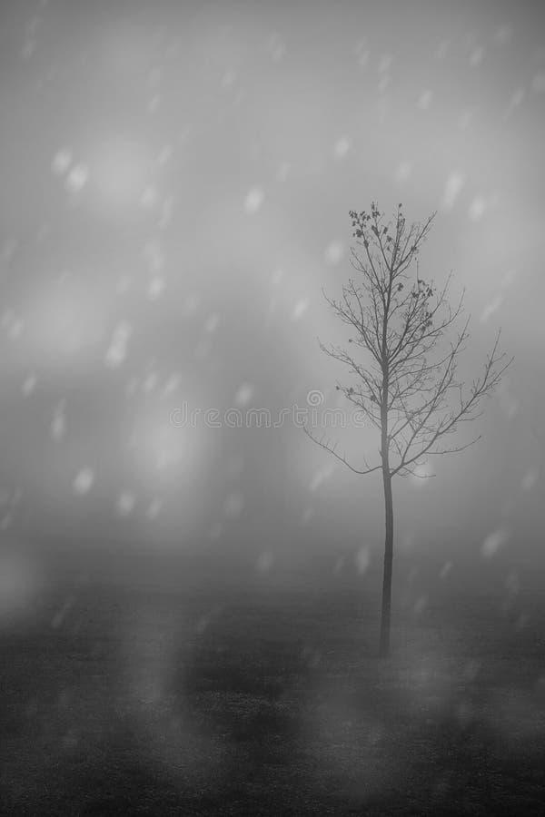 一棵偏僻的树的黑白照片 库存照片