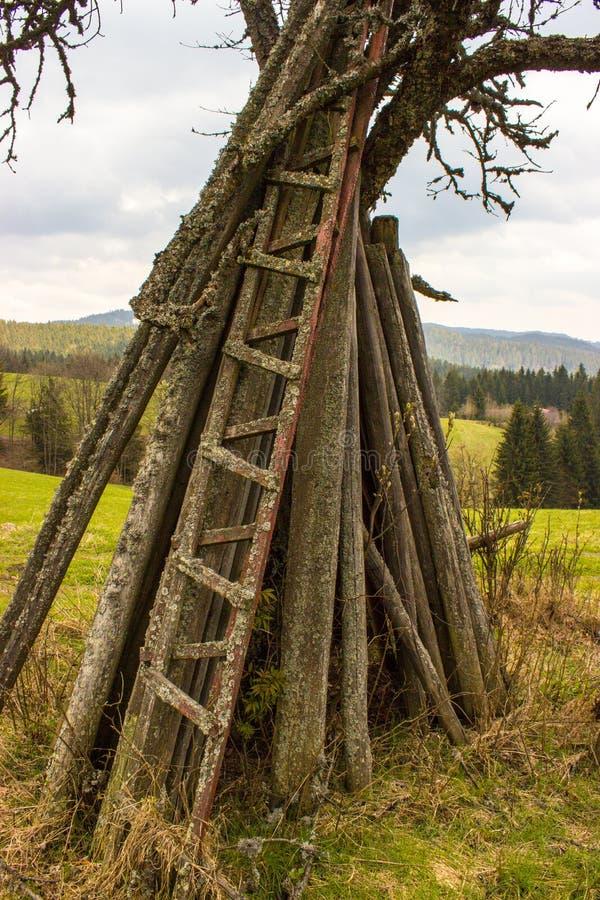 一棵分开的树 库存照片
