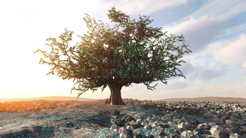 一棵唯一树在沙漠岩石风景离开 库存图片