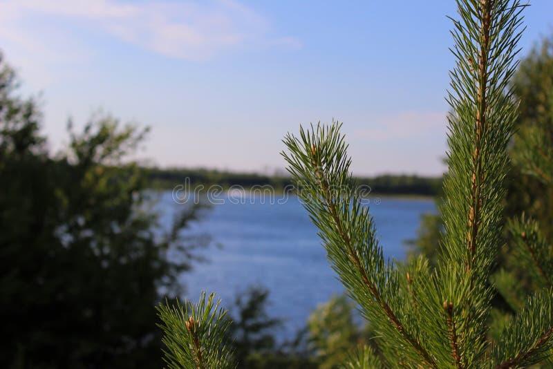 一棵圣诞树的宏指令在湖的背景的 库存照片