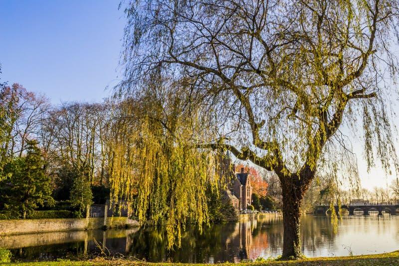 一棵垂柳树和一座桥梁的看法与湖的在背景中 免版税库存图片