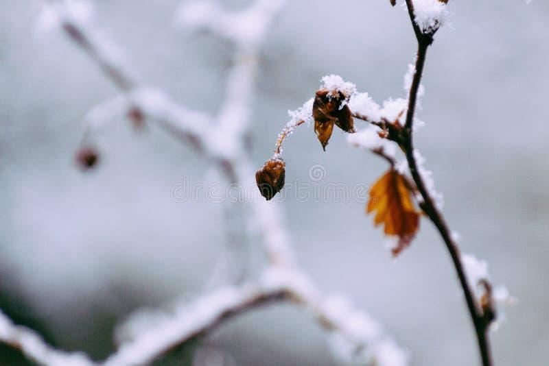 一棵多雪的植物的特写镜头 库存图片
