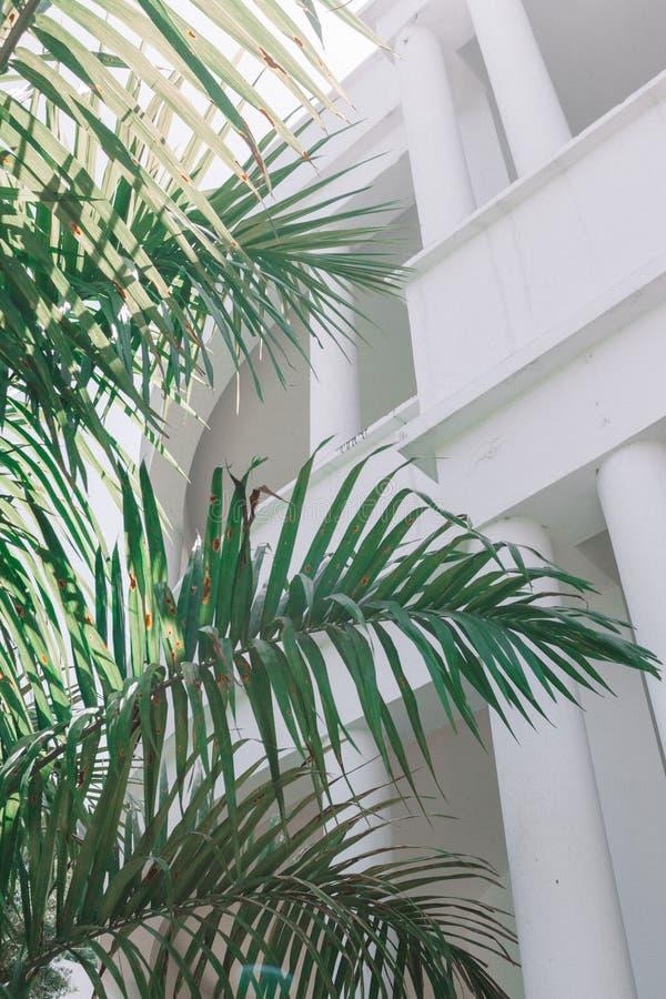 一棵大叶茂盛植物的垂直的内部射击有白色建筑学的在背景中 免版税库存照片