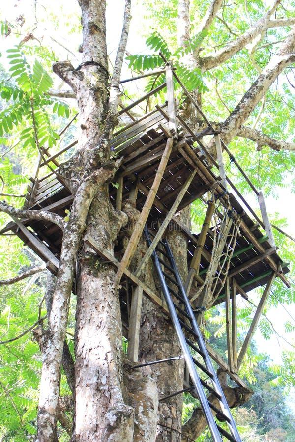 一棵大木树的树上小屋 库存照片