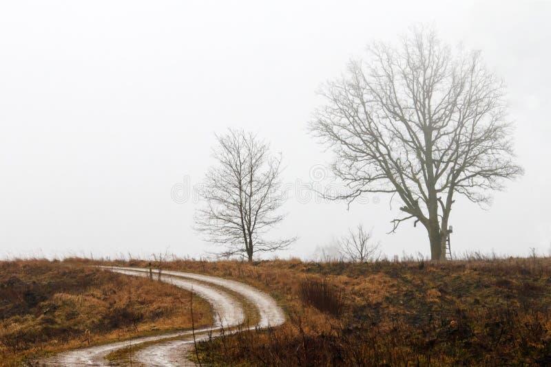 一棵孤立树在路的边 库存照片