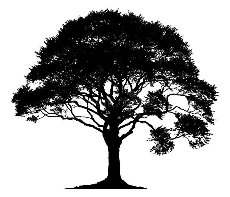 一棵孤立树的剪影 向量例证