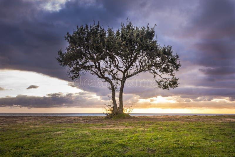 一棵孤立树的图象反对一个海滩和剧烈的天空的在日落期间 免版税库存图片