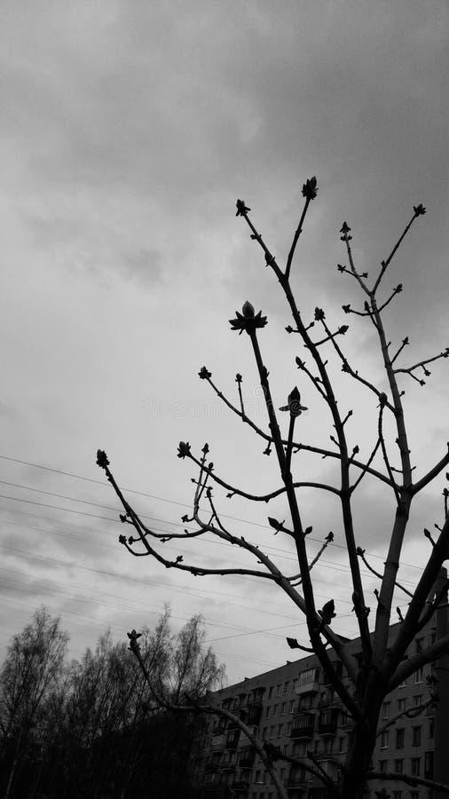 一棵小树拉扯分支对天空 库存照片